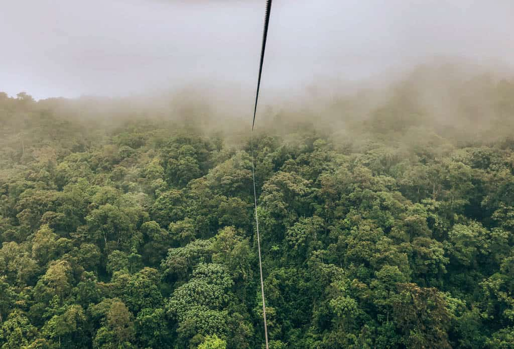 view of the cloud forest from the cable car