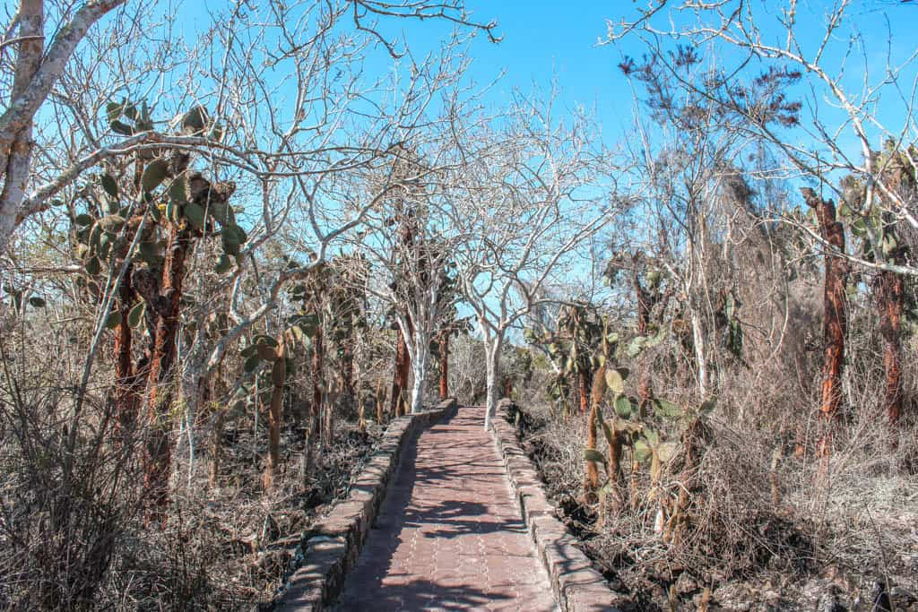 Cobblestone Path to Tortuga Bay with Cacti: Walking to Tortuga Bay on the Galapagos is FREE!