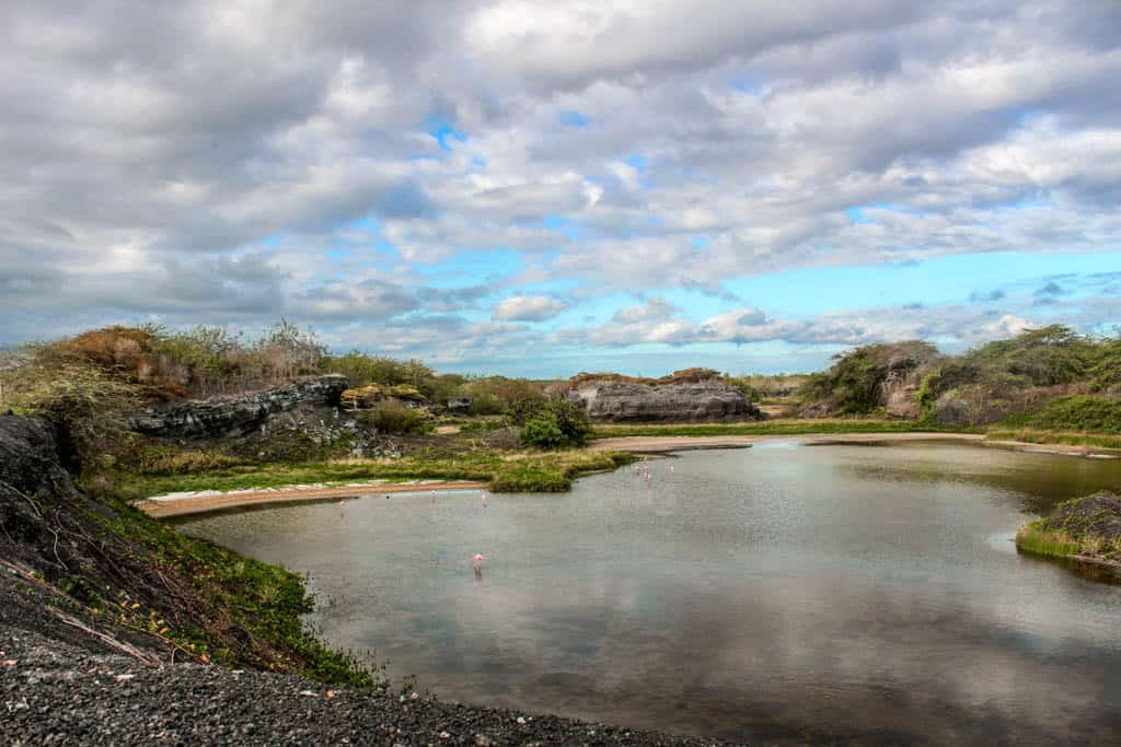 Galapagos on a budget: Check out Flamingo Lake