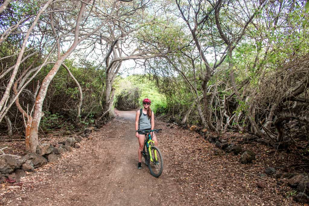 Get some activity and explore the Galapagos on a budget with a bike ride on Isla Isabela