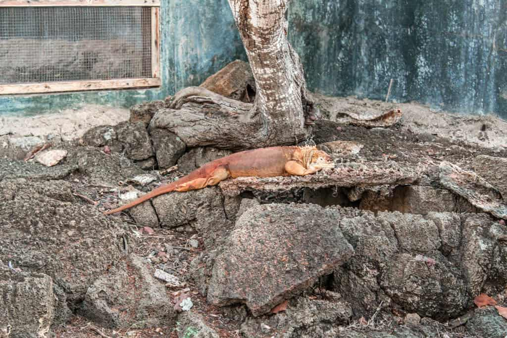 Galapagos on a budget is possible by pursuing free activities like the Charles Darwin Research Center