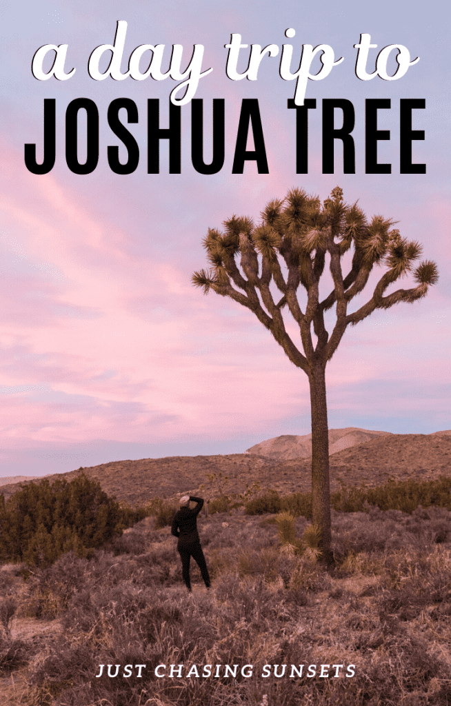 A day trip to Joshua Tree