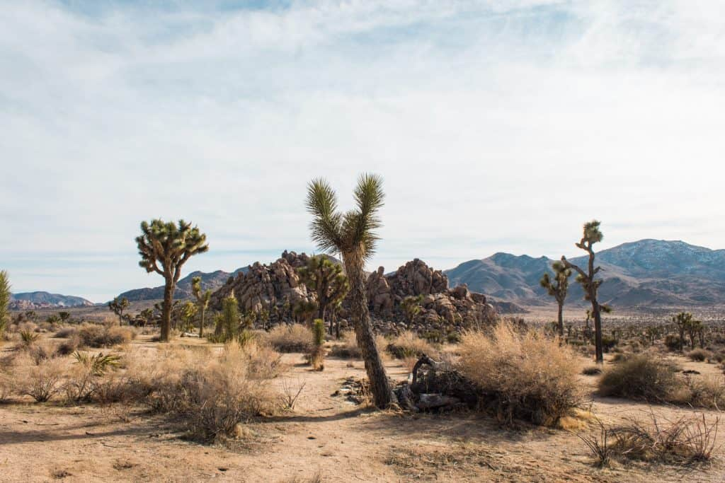 Day trip to Joshua Tree National Park