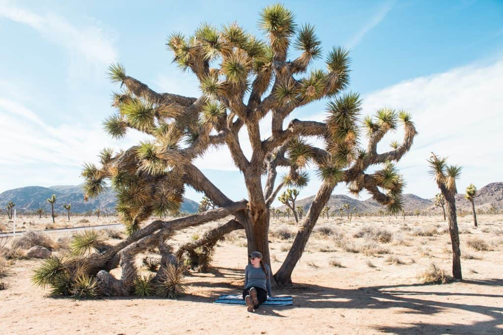 Joshua Tree day trip