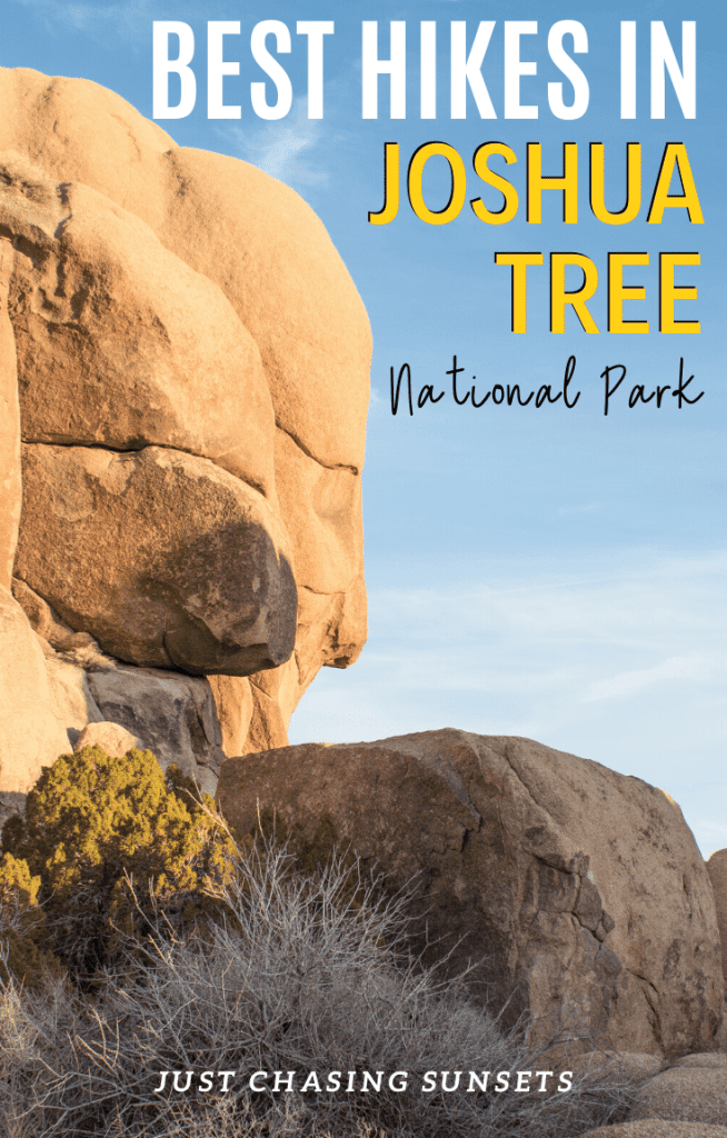 best hikes in Joshua Tree National Park