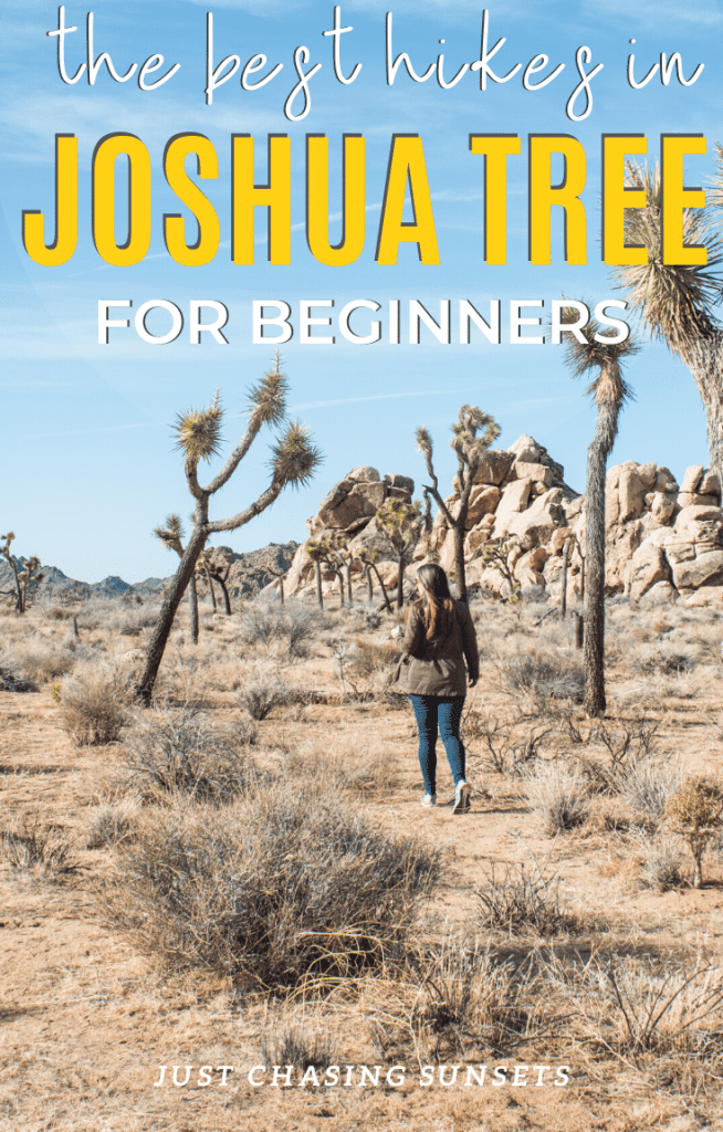 the best hikes in Joshua Tree for beginners
