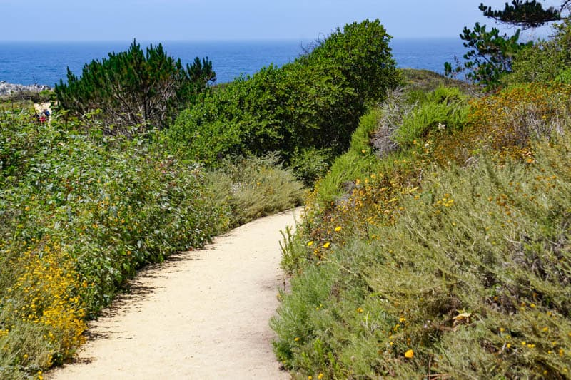 Bird Island Trail in Point Lobos Carmel California
