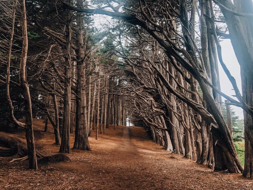 Cypress Tree Tunnel in Fitzgerald Marine Reserve in Half Moon Bay, CA