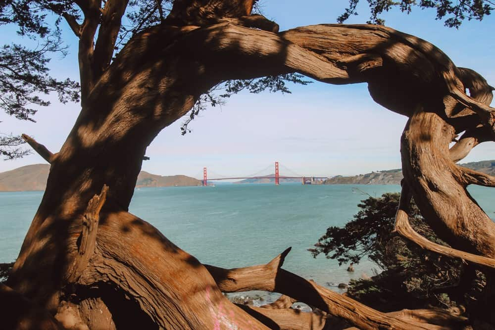 the Golden gate Bridge framed by knotted trees as seen from Lands End Hiking Trail in San Francisco, CA