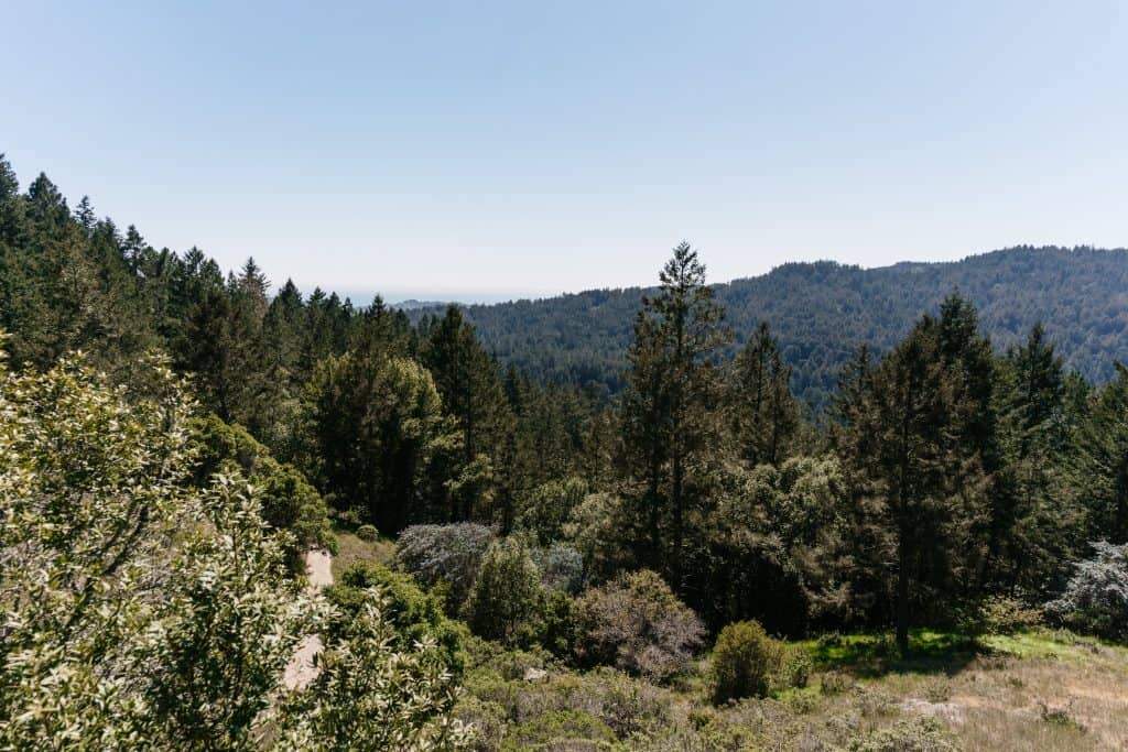 View above the Redwood Forest
