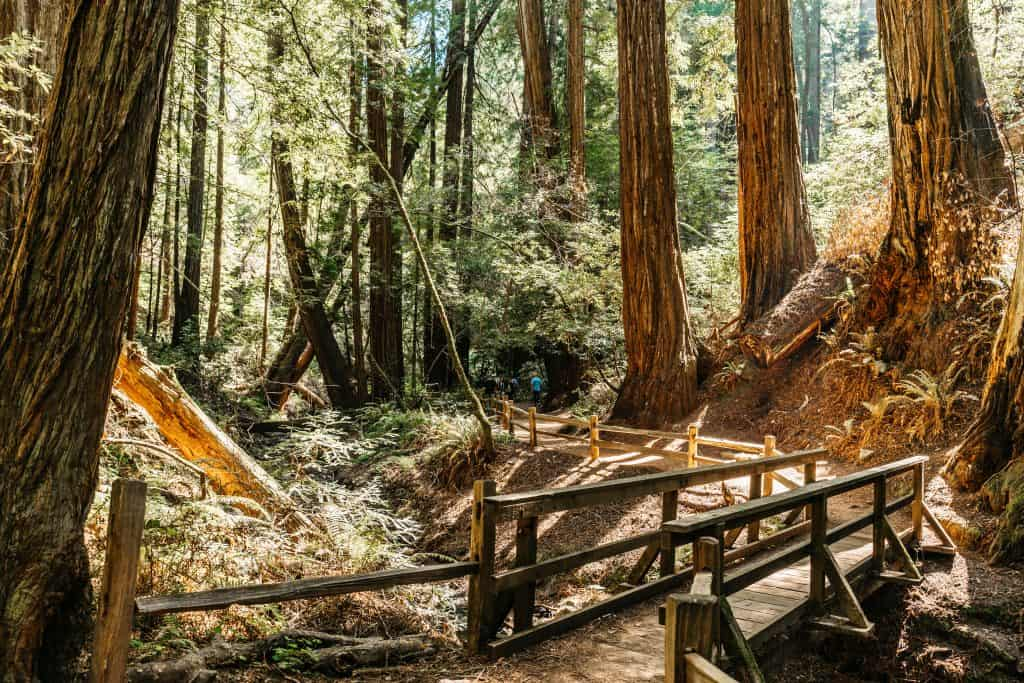 Small bridge over a creek in the Redwoods